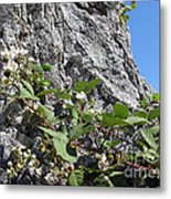 Blackberry On The Rock 04 Metal Print