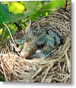 Blackbird Nest Metal Print