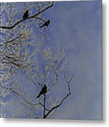 Blackbirds Metal Print