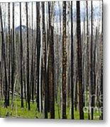 Blackened Forest  Metal Print