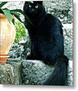 Blacky Cat Metal Print