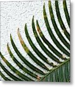 Bladed Leaf Against Stucco Wall Metal Print