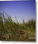 Blades Of Grass Metal Print