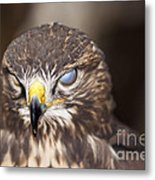 Blind Buzzard Metal Print