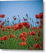 Blood Red Poppies On Vibrant Green And Blue Sky Metal Print by Edward Carlile Portraits