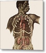 Blood Vessels Of The Thorax And Abdomen Metal Print by Mehau Kulyk