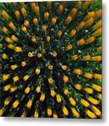 Bloomer Metal Print