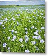 Blooming Flax Field Metal Print