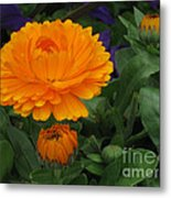 Blooming Gold Metal Print
