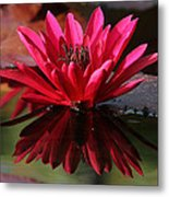 Blooming Red Lilly Metal Print