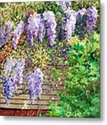 Blooming Wisteria Metal Print by Peter Sit
