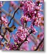 Blossoming Bird Metal Print