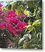 Blossoms And Breadfruit Metal Print
