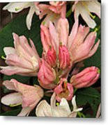 Blossoms And Buds Metal Print