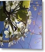 Blossoms In Bloom Metal Print by Katie Cupcakes