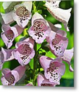 Blow The Trumpet Flora Metal Print by Andee Design