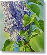 Blue And Lavender Lilacs Metal Print