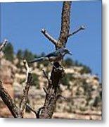 Blue Bird Grand Canyon National Park Arizona Usa Metal Print by Audrey Campion
