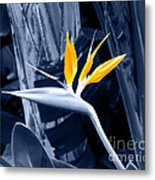 Blue Bird Of Paradise Metal Print
