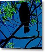 Blue-black-bird Metal Print by Todd Sherlock