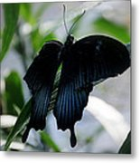 Blue-black Butterfly Metal Print
