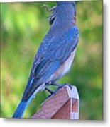 Blue Boy My Yard Bird Metal Print