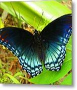 Blue Butterfly I Metal Print