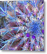 Blue Cactus Metal Print