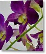 Blue Charm X Aridang Blue Orchid - 3 Metal Print