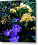 Blue Clematis With Yellow Lady Banks Rose Metal Print