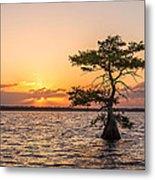 Blue Cypress Lake Sunrise Metal Print
