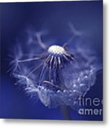 Blue Dandy Metal Print