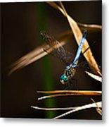 Blue Dasher Dragonfly Metal Print