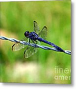 Blue Dragonfly On Barb Wire Metal Print