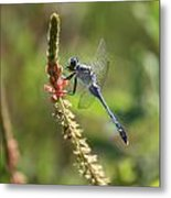 Blue Dragonfly On Pink Flower Metal Print