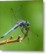 Blue Dragonfly Start Up Metal Print