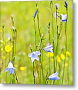 Blue Harebells Wildflowers Metal Print