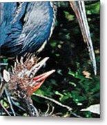 Blue Heron Family Metal Print