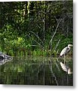 Blue Heron Long Pond Wmnf Metal Print