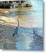 Blue Heron On The Beach Metal Print