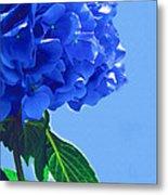 Blue Hortensia Hydrangea Metal Print