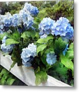 Blue Hydrangea On White Fence Metal Print