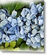 Blue Hydrangeas With Watercolor Effect Metal Print