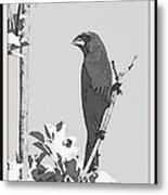 Blue In Black And White Metal Print
