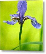 Blue Japanese Iris Metal Print