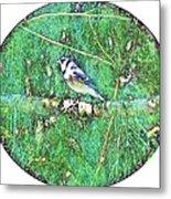 Blue Jay 8 Metal Print