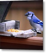 Blue Jay On Backyard Feeder Metal Print