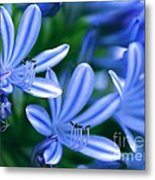 Blue Lily Of The Nile Metal Print