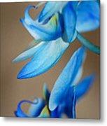 Blue Orchid  Metal Print