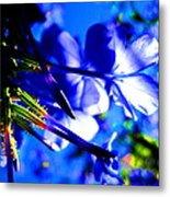 Blue Plumbago Flowers Metal Print by Catherine Natalia  Roche